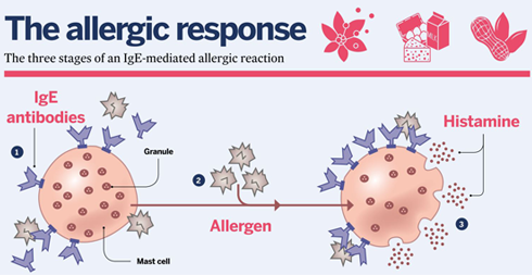 Allergy diagram